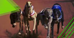 carreras de perros apuestas